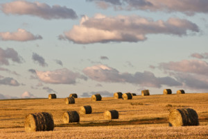 Hay bales on Canadian Prairies